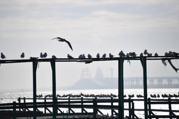 Įtampa auga: Rusija blokuoja laivų judėjimą į Azovo jūroje esančius Ukrainos uostus