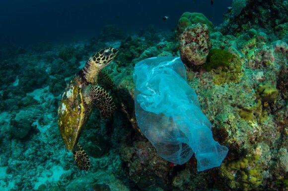Plastikinis maišelis vandenyne