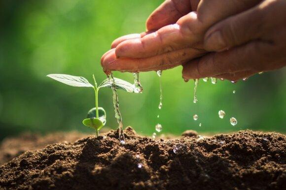 Pavasario žinynas: kaip teisingai įsirengti darželį ant palangės ir kitos daiginimo paslaptys