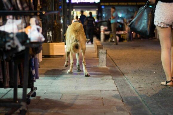 Valkataujantis, bet ne badaujantis šuo – visavertis miesto gyventojas