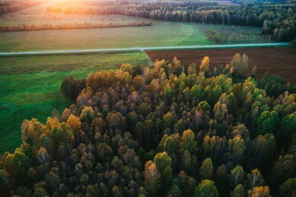 Kas laukia vertingiausių Lietuvos vietų, kai pradėsime kirsti daugiau miškų?