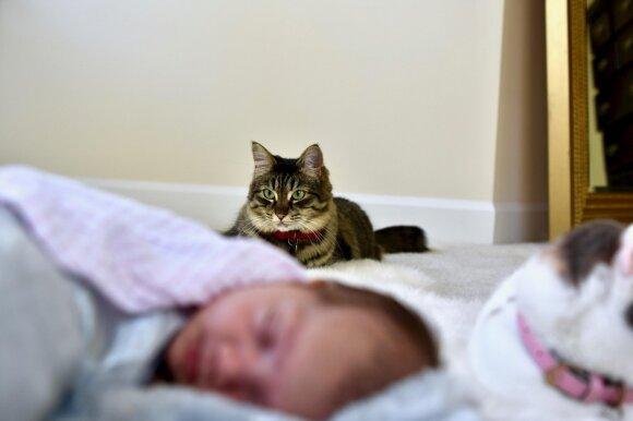5 gyvūnai, kurie labiausiai tinka vaikams: išmokys pareigos ir atsakomybės