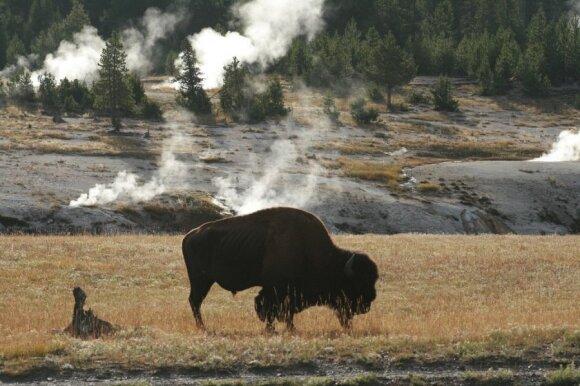 Jeloustono nacionalinis parkas, Vajomingas (CC BY 2.0 / JAV U.S. Geological Survey nuotr.)
