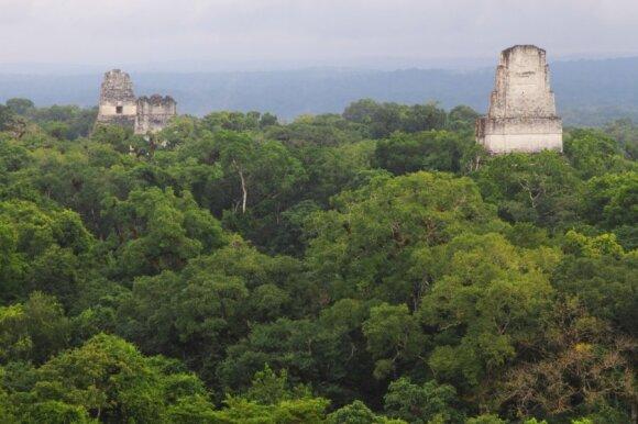 Tikalis, Gvatemala