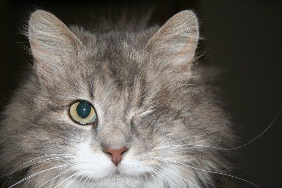 """Katinėliai. Foto / VšĮ """"Šlapia nosytė"""""""