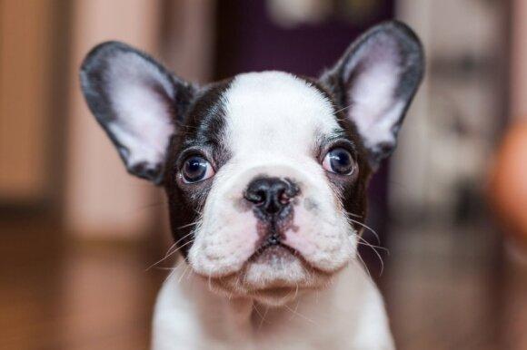 Ne kiekvienas šuo gali užsiimti kaniterapija