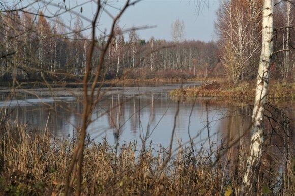 Miško ežerėlis gruodį