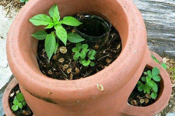 Aplinkai draugiška augalų šaknų laistymo sistema