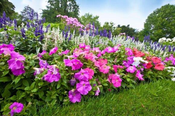 Kaip įrengti gražų gėlyną: gėlių derinimo abėcėlė