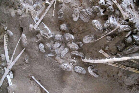 Dinozaurų Hamipterus tianshanensis fosilijos