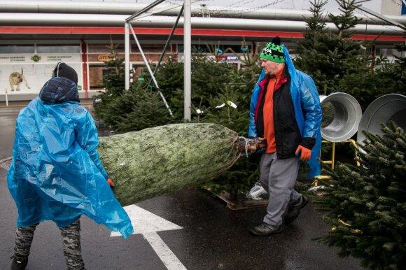 Pakvipo kalėdinėmis eglutėmis: iki šiol lietuvių namuose karaliavusios žaliaskarės turi naują konkurentą