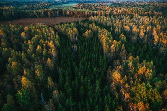 Apžvelgė Lietuvos miškų būklę: mažėja įveisiamo miško plotai