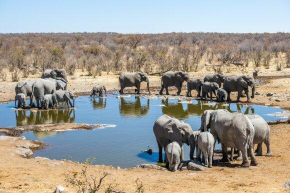 Etošos nacionalinis parkas, Namibija