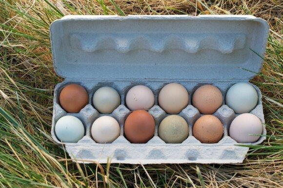 Kiaušinių dėklas