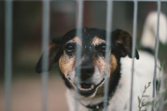 Pasiryžo išgelbėti milijoną šunų: man aiškino, kad pirma rūpinčiausi beglobiais vaikais