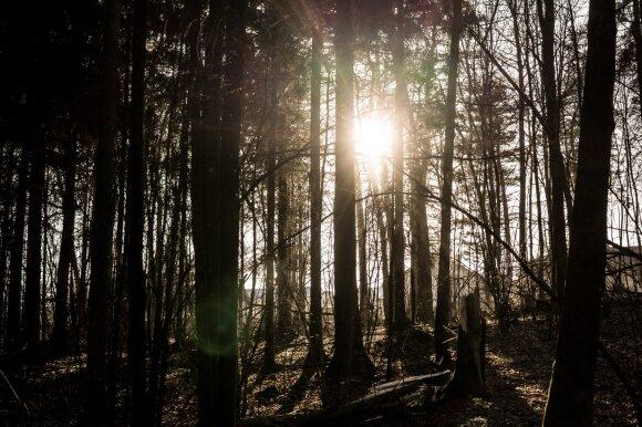 Jei grybaudamas pasuksi ne į tą miško kelią, sulauksi baudos