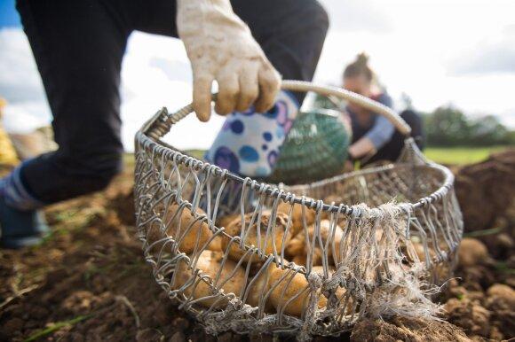 Šviežios žuvies ar vaisių jau galima nusipirkti ir internetu