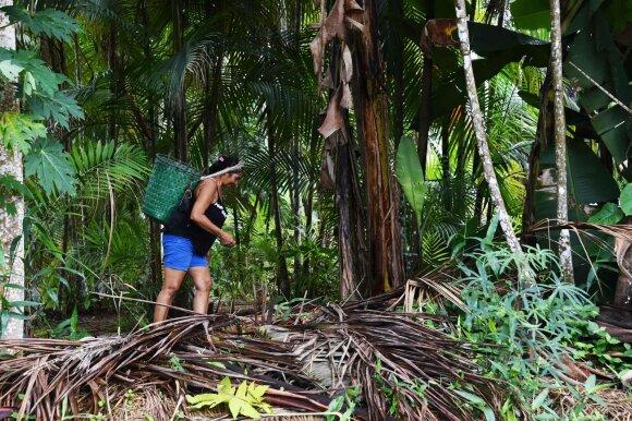 Amazonės miškai