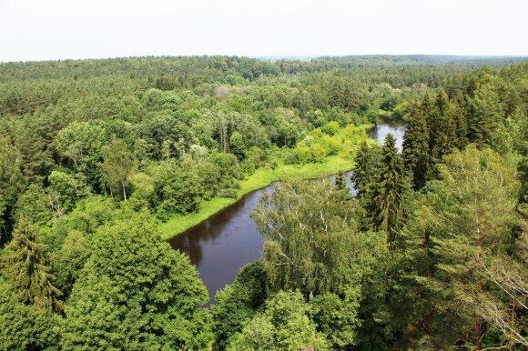 Miškuose pūva brangus turtas – galėtų atpiginti šildymą visai Lietuvai