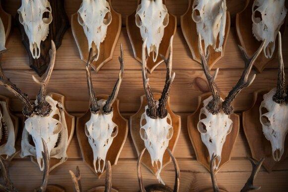 Gamtosauga ir gyvūnija viduramžiais rūpintasi tikintis naudos: sužinokite, kokios būdavo skiriamos nuobaudos