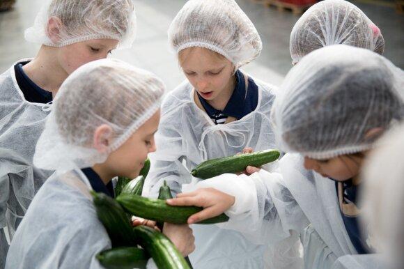 Vaikai daržovių šiltnamyje