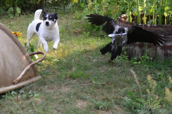 Varna Čita ir šunelis Bubis