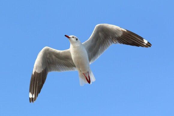 Paukštis ir lėktuvas