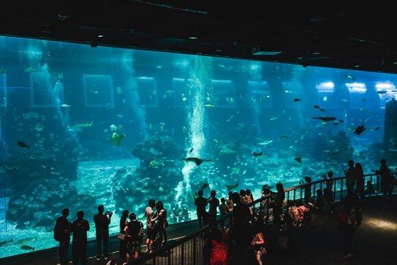 """S.E.A Aquarium"""
