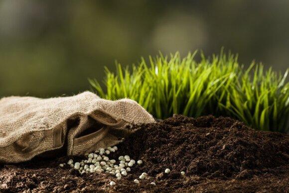 Nuodai lėkštėje: kaip ir kiek tręšti dirvą, kad netektų ragauti trąšų