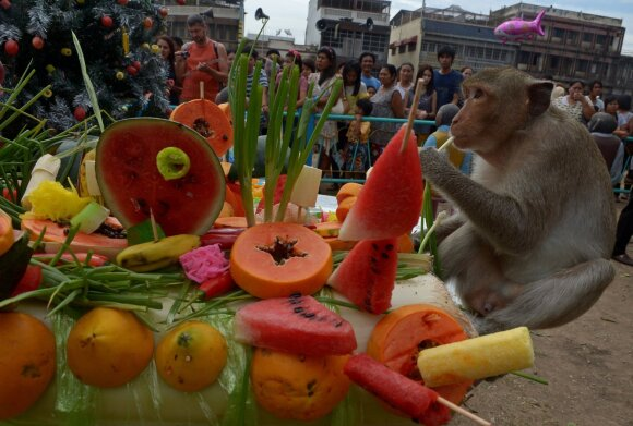 Beždžionių šėrimo festivalis