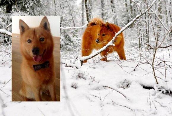 Skaitytojai ieško dingusių šunelių