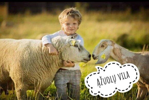 Idėjos savaitgaliui: net 13 gyvūnų parkų visoje Lietuvoje, kurie patiks ne tik vaikams