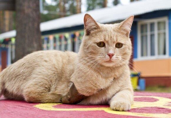 Veterinarų teigimu, gyvūnai puikiai geba gyventi ir su trimis kojomis