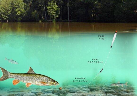 Schema. Ūsorių žvejyba