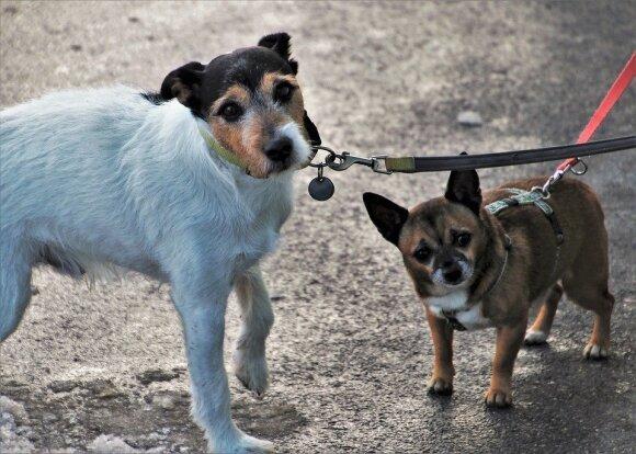 Šuns vedžiojimas