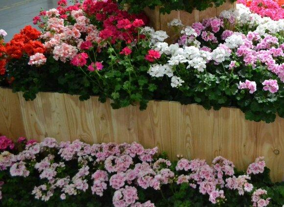 Kaip sukurti nuostabią poilsio oazę: patarimai auginantiems gėles balkone