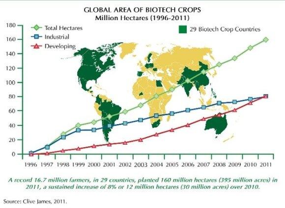 Žaliai pažymėtos valstybės, kurios leidžia auginti bent vieną GMO kultūrą. Grafikas rodo augančių GMO pasėlių kiekį pasaulyje / Prof. P. J. Davieso paskaitos medžiaga