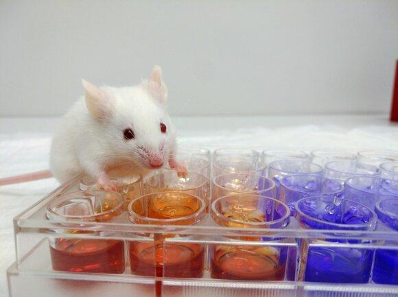 Laboratorinės pelės