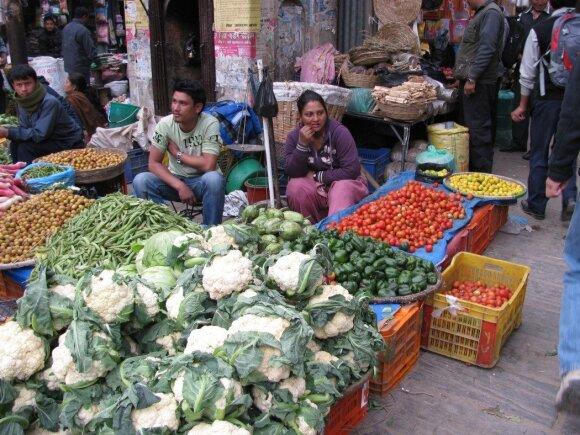 Turgus Nepale