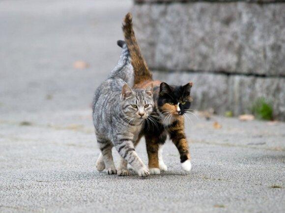 Gyvūnų globėjai nežino, kam galėjo būti panaudotos katės ir šunys