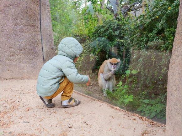 Kelionė namo ir Leipcigo zoologijos sodas