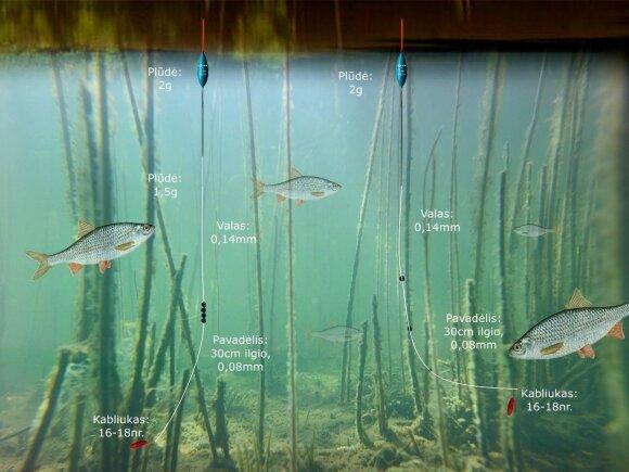 Schema. Kuojų žvejyba tvenkinyje