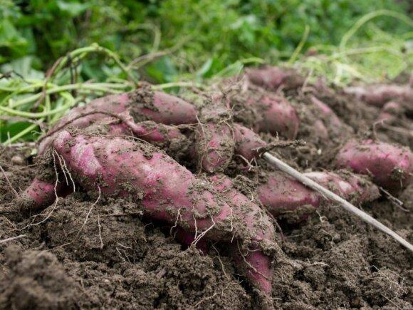Gamtinė žemdirbystė / PhoTones_TAKUMA nuotr.