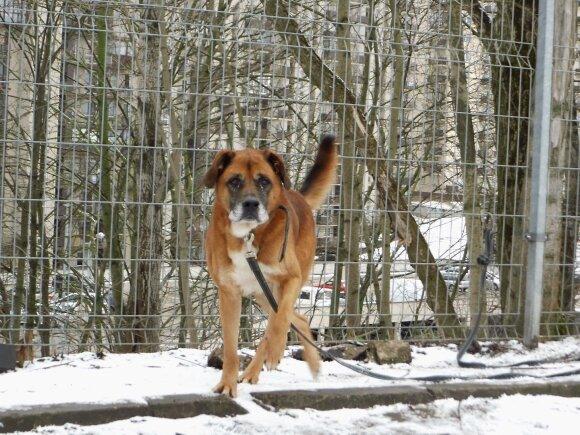 Ieškoma pagalba atstumtam ir išduotam šuniui