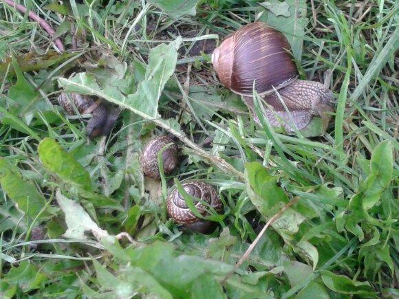 Kaip naminėmis priemonėmis išnaikinti 5 pavojingiausius sodo kenkėjus