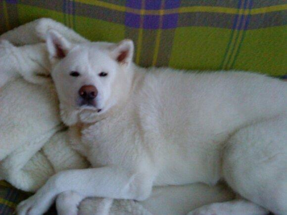 Netikėta nelaimė: buvęs draugas iš rankų išplėšė šunį