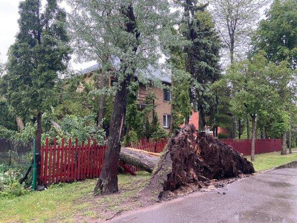 Audra neaplenkė Panevėžio: medį užvertė ant vyriausios rajono gyventojos namo