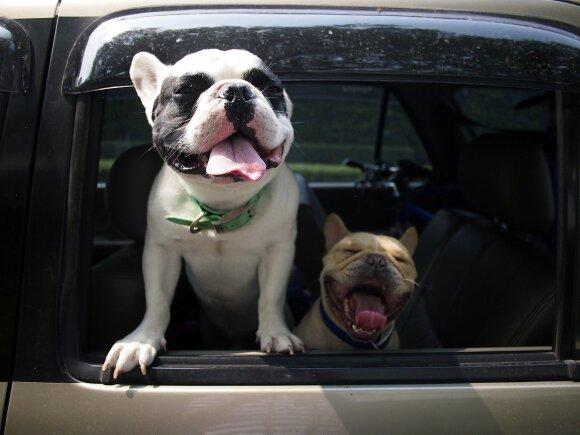 Palaidi gyvūnai automobilio salone