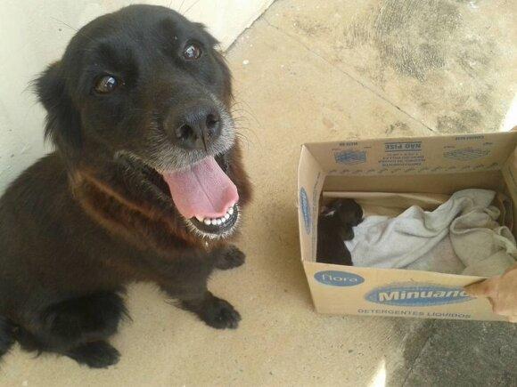 Kalytė išgelbėjo šuniuką