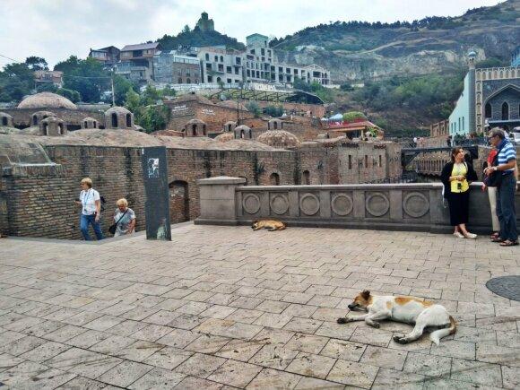 Tbilisyje gyvena labai daug benamių šunų